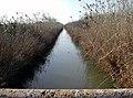 Canal de l'albufera.JPG