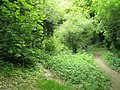 Candy's Pit Trail (2) - geograph.org.uk - 1286251.jpg
