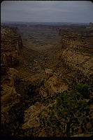 Canyonlands National Park CANY1135.jpg