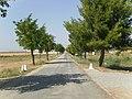 Carretera Requena hacia el cementerio - panoramio.jpg