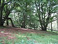 Castramont Wood - geograph.org.uk - 1423911.jpg