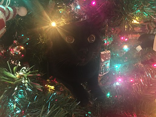 Cat hiding inside a Christmas tree