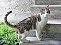 Cat in Yerevan, 09052018 (7).jpg