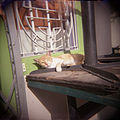 Cat photographed with toy Holga camera.jpg