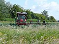 Cauliflower harvesting - geograph.org.uk - 1399144.jpg