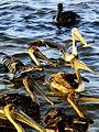 Celestun Yucatan Aves.jpg