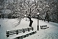 Central Park benches in the snow.jpg