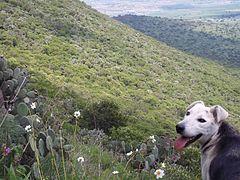 Cerro Mesa Ahumada (26).jpg