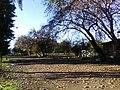 Chada, Paine, Chile - panoramio.jpg