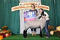 Champion Natural Colored Jr. Market Lamb (31271958778).jpg