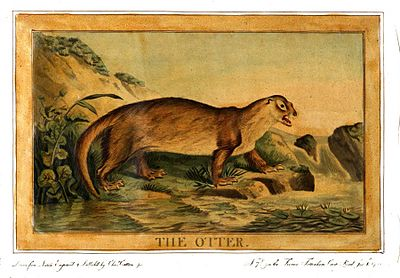Charles Catton, Animals (1788) Page58 Image1.jpg