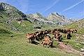 Chevaux estive Pyrenees.jpg