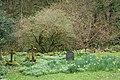 Churchyard of St Beuno's Church, Culbone, Somerset.jpg