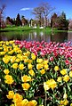 "Cincinnati - Spring Grove Cemetery & Arboretum ""Tulips at Willow Fountain"" (5676425974).jpg"