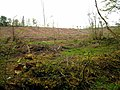 Clear-felled forest at Cloonfad - geograph.org.uk - 803439.jpg