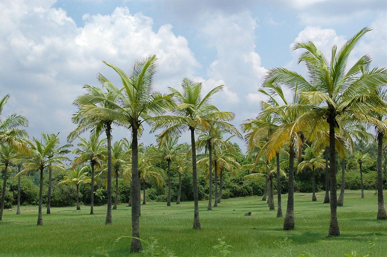 Palm Island Plantation Vero Beach Florida