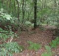 Coilsfield Deer Hay, Tarbolton - ditch system near the Water of Fail.jpg