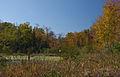 Color on the Bog (6306330533).jpg
