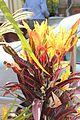 Colour full plant.jpg