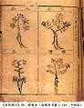 Compendium of Materia Medica 3.jpg