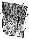 Compendium of histology (1876) (20484385159).jpg