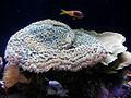 Coral (2).jpg