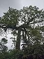 Costa Rica (6091573797).jpg
