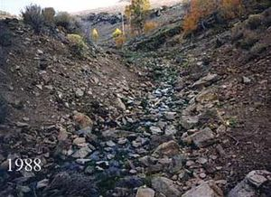 A rocky, brown stream bank mostly bare of vegetation, with a few aspen trees in the background