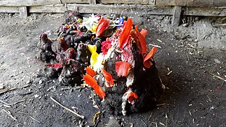 Tihar (festival) - Cow dung during Gobardhan Pujā
