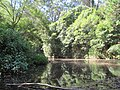 Creek in the Royal National Park number 2.jpg