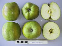 Cross section of Catshead, National Fruit Collection (acc. 1927-027).jpg