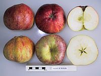 Cross section of Fraise de Buhler, National Fruit Collection (acc. 1947-068).jpg