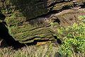 DAVIS fall in pokhra (3).jpg
