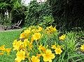 Day Lillies - panoramio.jpg