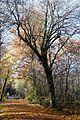 Deisenhofener Forst Lanzenhaar-17.jpg