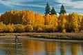Deschutes National Forest Recreation paddle boarder (36922374572).jpg