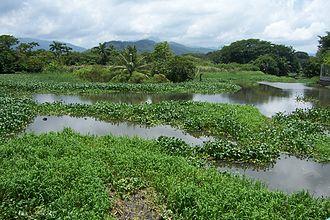Atlántida Department - Image: Desembocadura del río de Tela