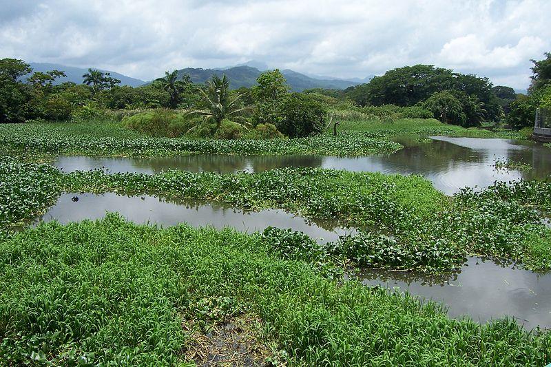 Archivo:Desembocadura del río de Tela.JPG