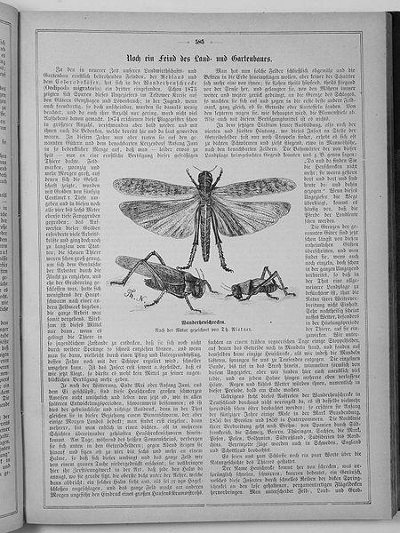 File:Die Gartenlaube (1875) 585.jpg
