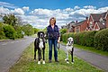 Dog walker with Great Dane dogs..jpg