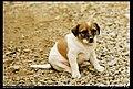 Dogs (5080844503).jpg
