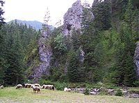 Polana pod Jaworki