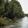 Donau Auen.TIF