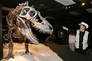 "Robert T. Bakker - Mounted Gorgosaurus skeleton with several bone injuries, from the ""Dinosaur Mummy: CSI"" exhibit at the HMNS, Bob Bakker on the right"