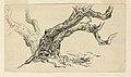 Drawing, Sketches. Sycamores, Santa Barbara, California, ca. 1888 (CH 18368909).jpg