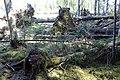 Dulbju acs purva dabas lieguma ziemeļu malā vēja izgāztie koki.jpg