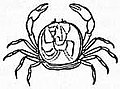 EB1911 Crab - Fig. 7.—Pinnotheres pisum (Pea Crab).jpg