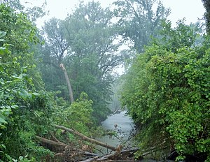 East Arm Little Calumet River Heron Rookery west from 600 East towards the Heron Rookery.JPG
