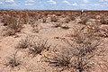 East of the Black Range - Flickr - aspidoscelis (9).jpg