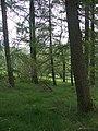 Edge of Ceulan forest - geograph.org.uk - 809684.jpg